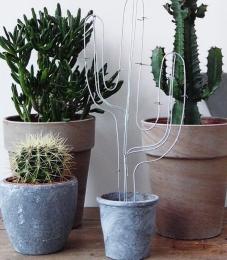 Negen-redenen-om-planten-in-huis-te-nemen1.jpg
