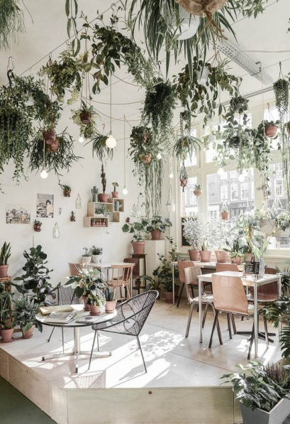 planten kamer.jpg
